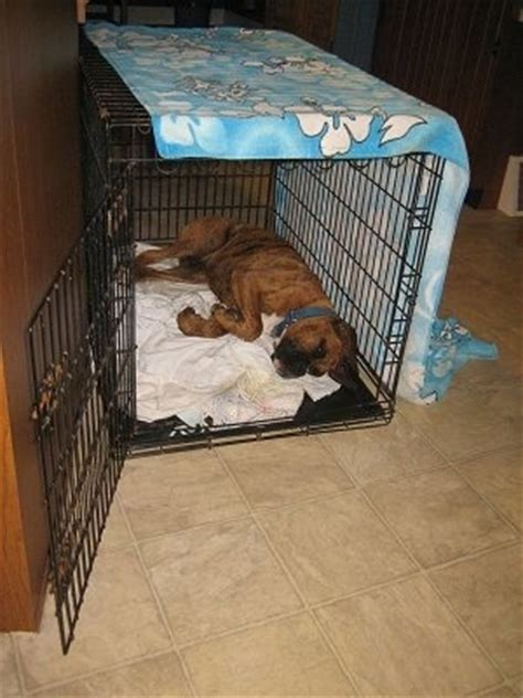 puppy using bathroom in crate raising a puppy 15th week in his new home