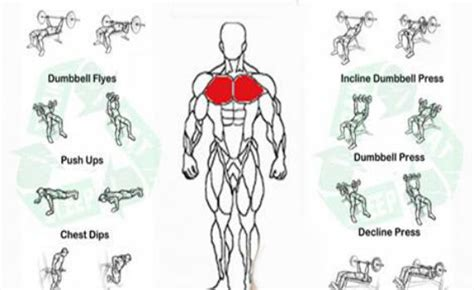 chest exercises for and fitness