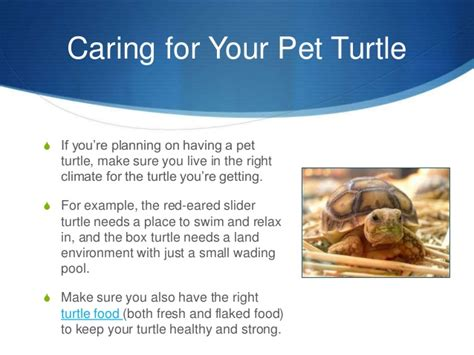 do turtles need heat ls 7 types of pet turtles