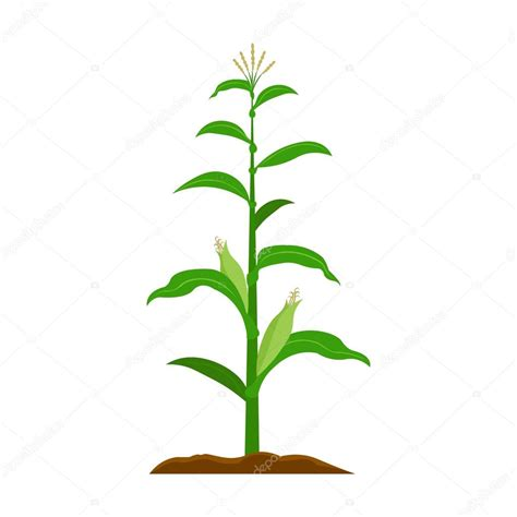 buy large house plants 28 images corn plant indoor corn icon cartoon single plant icon from the big farm