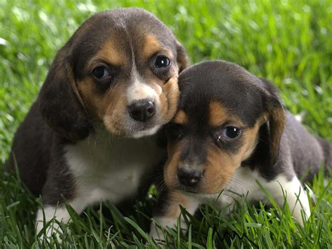 cute pictures of puppies 1 the cute dogs and puppies nice wallpapers nice