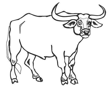 bull coloring chicago bulls coloring sheets printable coloring pages