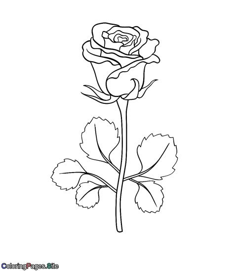 coloring pages of derrick rose derrick rose pages coloring pages