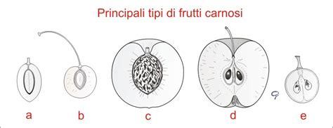 fiore zigomorfo acta plantarum home page