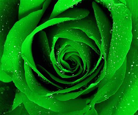 wallpaper bintang hijau mawar hijau wallpaper apl android di google play