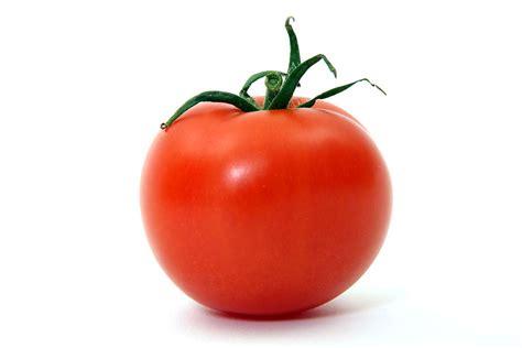 Jepit Rambut Tumbuhan Buah Buahan manfaat buah tomat dimakan mentah langsung halodok