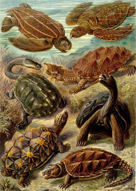 biography as an art form art forms of nature the ernst haeckel collection