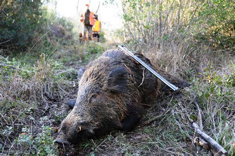 ufficio caccia e pesca roma l atc di ascoli propone un corso per cacciatori di
