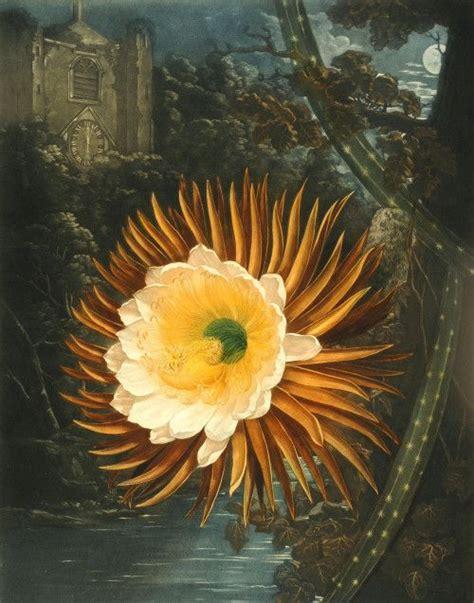 libro mapplethorpe flora the complete 17 best images about el museo de papel on glass vase vincent van gogh and flora