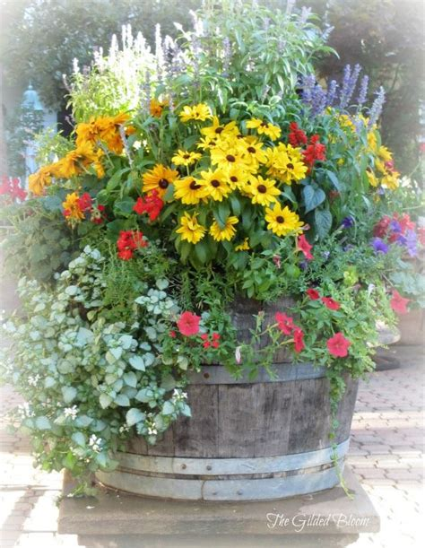 backyard container gardening ideas wine barrel garden tall salvia yellow rudbeckia