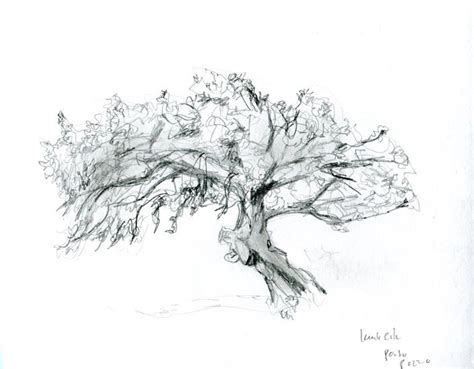 b tree drawing tool 28 best images about tree sketches on trees