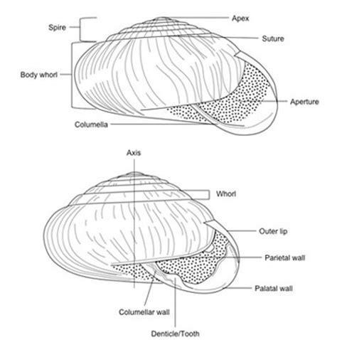 diagram of land snail terrestrial snails affecting plants in florida