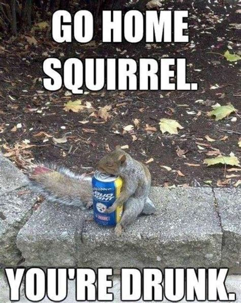Dead Squirrel Meme - 17 best images about beer meme on pinterest craft beer