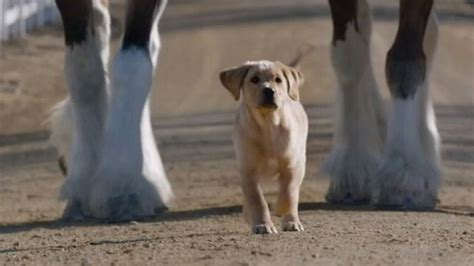 that has puppies commercial image gallery budweiser commercial 2014