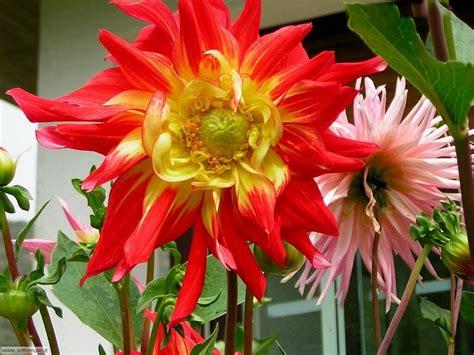 ci fiori slideshow foto fiori 2 settemuse it