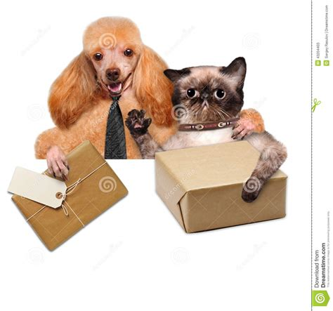 puppy delivery cat and delivery post box stock photo image 43204403
