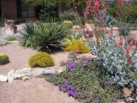 cool xeriscape ideas pictures best inspiration home design eumolp us