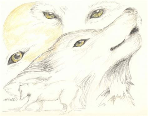 Sketches Wolf by Wolf Sketches Drawing Conclusions