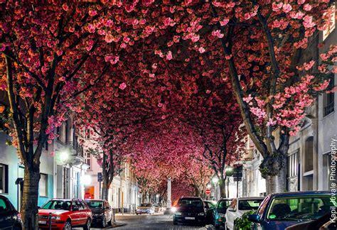 Lu Taman Berdiri 14 tempat terbaik melihat bunga mekar selain jepang