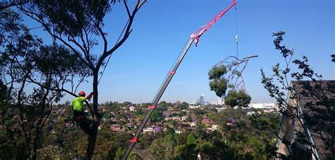 sydney trees sydney tree solutions tree removal sydney tree surgeon