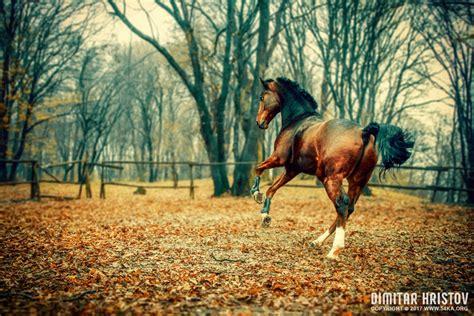 horse   beautiful forest ka photo blog