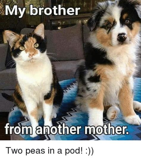 Two Peas In A Pod Meme - 25 best memes about brother from another mother brother