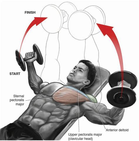 incline bench dumbbell fly chest bo dy com