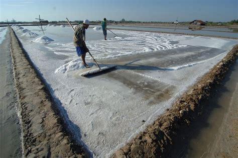 Usaha Membuat Garam   catat kebijakan impor jangan matikan usaha garam rakyat