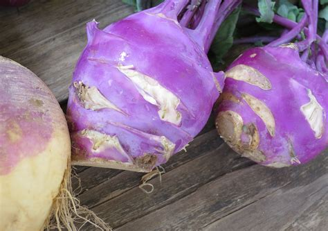 kohlrabi root vegetables oven co root vegetables worth trying oven co