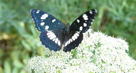 insetti volanti insetti volanti felicit 224 pubblica