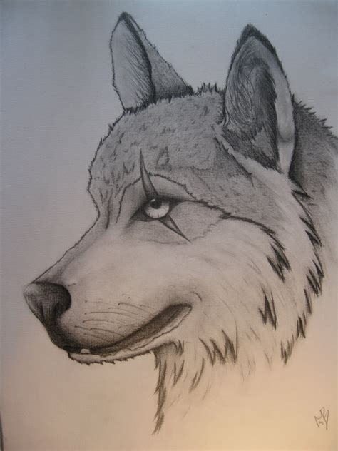 wolves drawings scarred wolf by tigressdrawing on deviantart