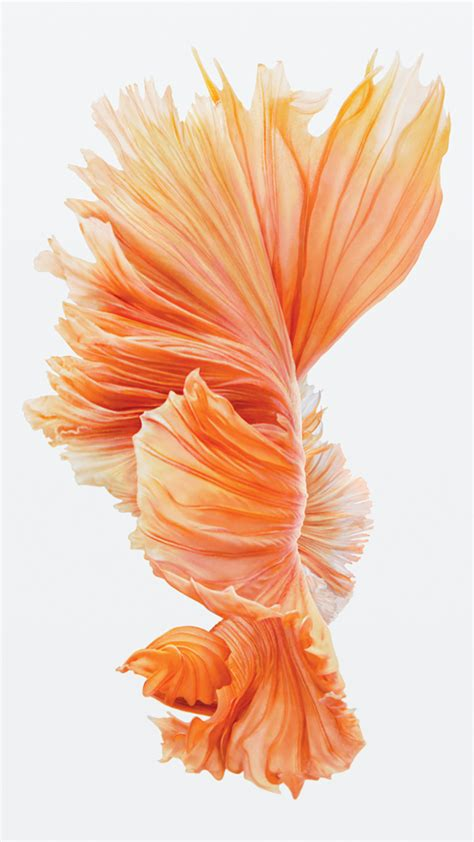 wallpaper iphone fish wallpapers of the week iphone 6s still wallpaper images