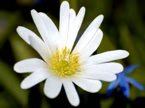 White Flower Images by White Flower