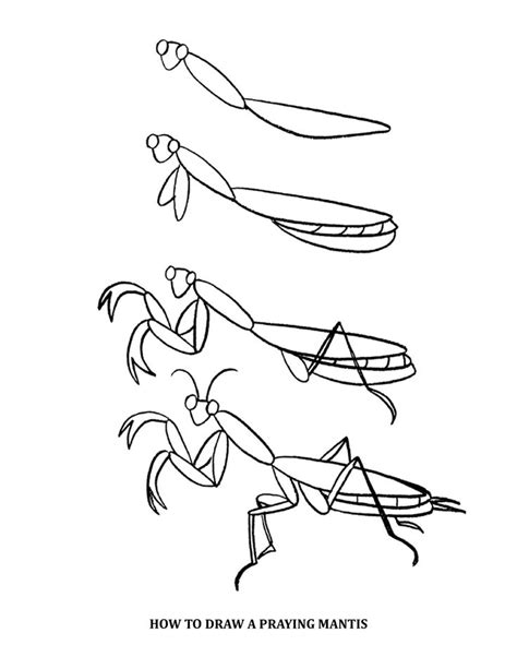 How To Draw A Praying Mantis Easy 16 best preying mantis stencils drawings images on