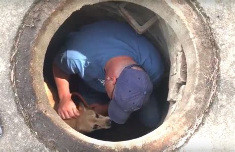 puppy rescue st louis stray found in st louis sewer grabs national attention the animal rescue site