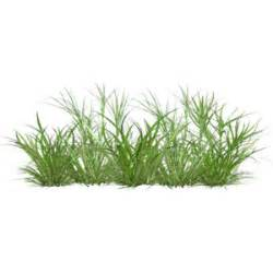 Flower Vase Shapes Grass 21 Png Polyvore