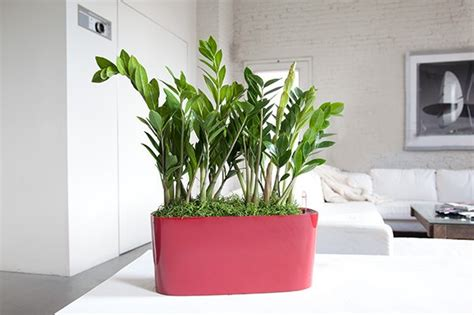 indoor plant design choosing the best indoor plants for your interior