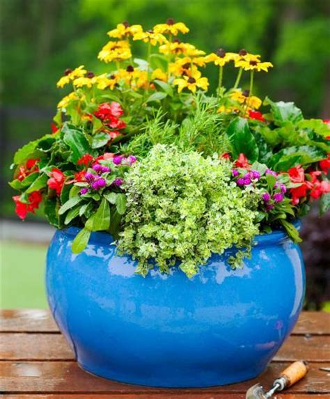 container flower garden 35 beautiful container gardens midwest living