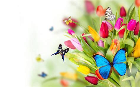 colorful butterflies on flower garden hd wallpapers rocks