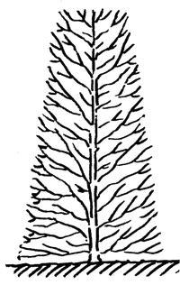 Wie Pflanze Ich Eine Hecke 5269 by Hecke Pflanzen Kessler Baumschule Pflanzen F 252 R Ihren