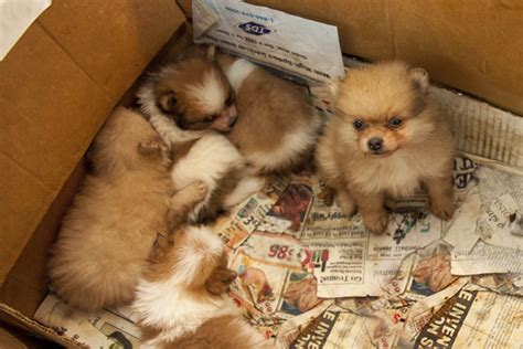 aspca puppies breaking aspca rescues more than 130 dogs from alabama puppy mill aspca