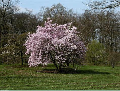 magnolia garden nursery