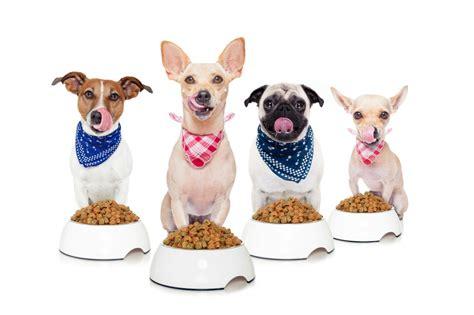 alimentazione cani piccola taglia alimentazione di piccola taglia