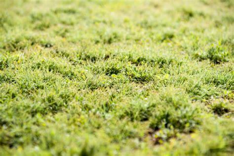 Was Tun Gegen Moos Im Rasen 6931 by Moos Im Rasen Dauerhaft Entfernen