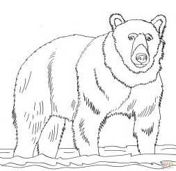 coloring pages alaska animals coloriage ours brun sur l eau coloriages 224 imprimer