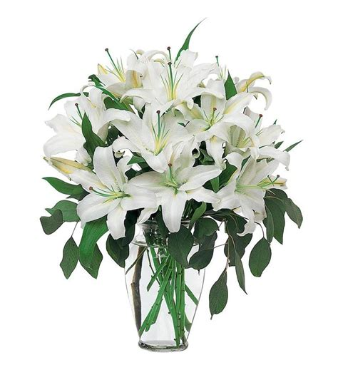 White Lilies white lilies tf24 1 94 46