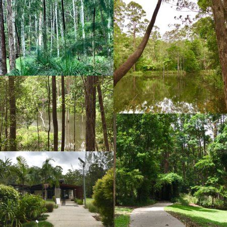 Maroochy Botanic Gardens Maroochy Regional Bushland Botanic Garden Queensland All You Need To Before You Go
