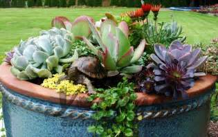 companion plants in succulent planters