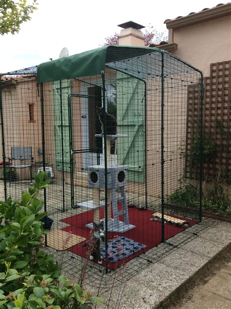 grand enclos pour chats chats omlet