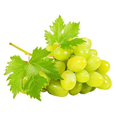 imagenes de uvas verdes y moradas pin uvas moradas gracias a imagenesinet imagenes y foto de